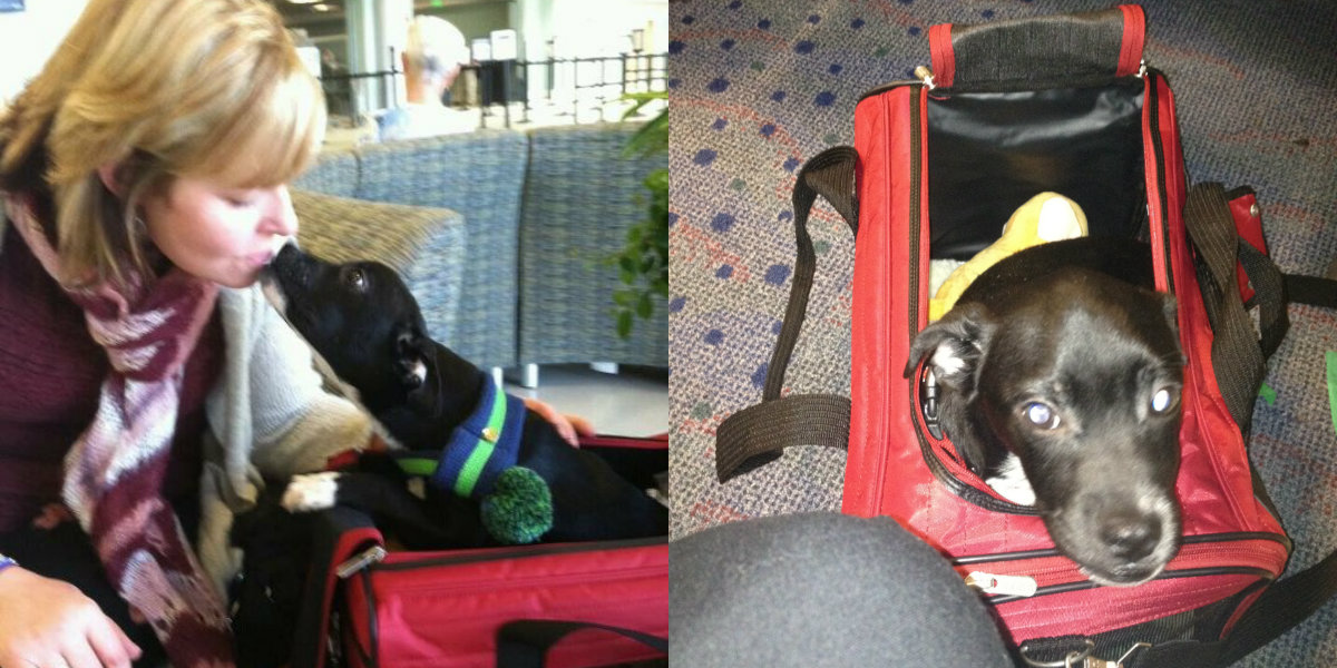 delta employees fly shelter animals to their \u0027fur ever\u0027 homesdogs in carriage