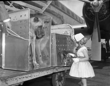 Delta Dog 1955