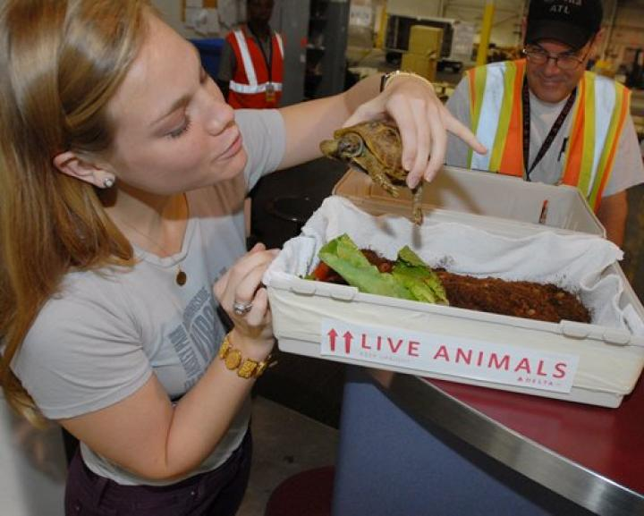 Delta To Stop Accepting Pets As Checked Baggage Delta News Hub